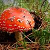 """Macro........""""Fungus""""........Del Tubb.........Accept"""