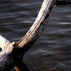"Novice grade set subject / Water........"" Muddy waters"" by Brenda King<br /> <br />  The water does look muddy but the branches are a tad over exposed, especially on the left These branches are very dominant and the water becomes incidental to the image. A good effort but doesn't quite make the grade this time fora water theme... NOT ACCEPTED."