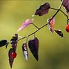 13_SS 01 N  Autum berries
