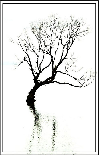 "B grade Set Subject: Hi Key, Low Key........ ""Tortured"" by Jacqui Scott........Honours<br /> <br /> Tortured<br /> Nice high key shot of a tree in the lake, well framed and the border works well adding to the picture. Possibly slightly done. Honours"