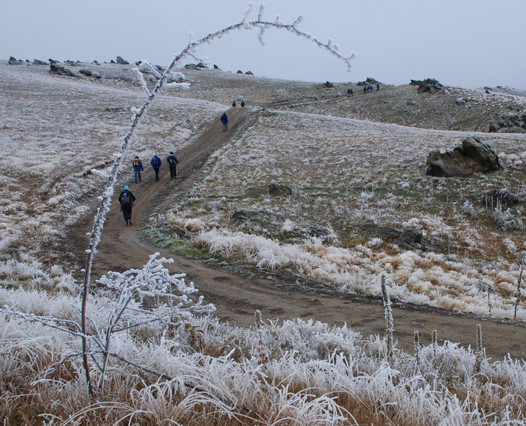 "N grade Open........Frosty Walk"" by Allan Ford........<br /> <br /> Brrr... I can feel it now, clever use of the iced up twig to frame the walkers.<br /> Well exposed in difficult lighting conditions but slightly soft also. Nice effort.<br /> Acceptance."