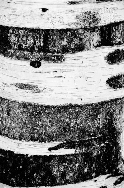 "Patterns of nature/ Novice........""Birch Bark"" by Lea Worley........Acceptance"