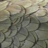 """Patterns of nature/ Novice........""""Kea"""" by Jemma Tippet........Acceptance"""