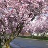 "Open/Novice........""Pretty In Pink"" by Brenda King........Acceptance"