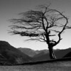 """B grade open........"""" Tree On Top """"  by Christine Martin........Not Accepted.<br /> <br />  I like the black and white treatment and the placement of the tree in the image. This makes for a pleasing composition. What is not so good is the obvious pixilation and fringing going on and the subject matter here with all the twigs and bare branches really accentuates the effect This points to an excessive use of the sharpening tool which in turn indicates that you could have used a tripod or changed your settings (aperture/shutter speed] so that the image was nice and sharp. You obviously have a good eye for composition. Now it's time to go back on those basics necessary to make the image you start to work on nice and sharp . It may be that the original is sharp and the post processing is the cause. In anticipation of that being the case, I'm going to not accept the image and suggest you go back to the original and check it out for sharpness."""