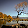 """A grade open........"""" Wanaka Tree In Autumn """"  by  Del Tubb........Merit.<br /> <br /> MERIT_Very well composed. The low viewpoint adds interest to the bald blue sky."""