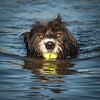 "A grade open subject........."" Doggy Paddle ""  by  Del Tubb........Merit.<br /> <br /> Very crisp and sharp, great eye contact. Bit too much of a bulls-eye effect with the dog smack bang in the middle. Would be improved by cropping top and bottom."
