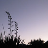 Dawn or Dusk Heather Simpson<br /> A good silhouette but I feel the shot was taken too close to daylight for it to be considered a true night shot. You have the elements of your image strongly placed within your composition and the curves of the flax adds interest to the silhouettes. However, because I do not feel this qualifies for the set subject I am not accepting it.<br /> Not Accepted
