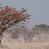 Val  Pohio AFRICAN AUTUMN <br /> great atmosphere in this – it absolutely reeks of hot, late summer haze - the tree is in a very strong position and is balanced by the smaller, lighter bushes to the right – I like the long low format which perfectly suits the idea of vast African plains.	                                         MERIT