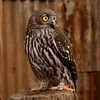 Big eyes Bob Steel Award: Accepted<br /> Due to the length, the comments will be posted with the next newsletter :-)