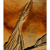 Sand Art                   Jacquie Scott<br /> A gorgeous subject with beautifully warm and richly saturated colours. Well seen and especially well captured. I particularly like the vertical presentation of this subject and the effective border just finishes it all off nicely.	<br /> Honours