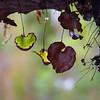 OpenBarbara Lee<br /> Autumn advancingBmerit
