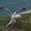OpenJacquie Scott<br /> Squabling gullsAmerit