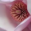OpenAnnie Patterson<br /> Magnolia pinkNhon