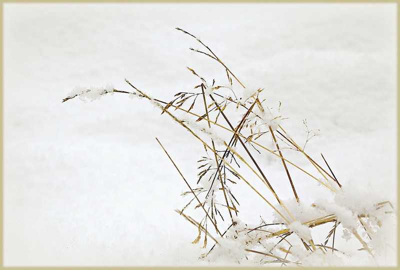 Bowing to Winter Barbara Lee A<br /> Tells a lovely story of summer's abundance before winter obliterates all trace of the previous season before the new start of spring.  Very well composed with the grasses on the bottom RHS leading the eye across the diagonal.  The simplicity of this image is its strength.  Very well exposed and presented. Merit