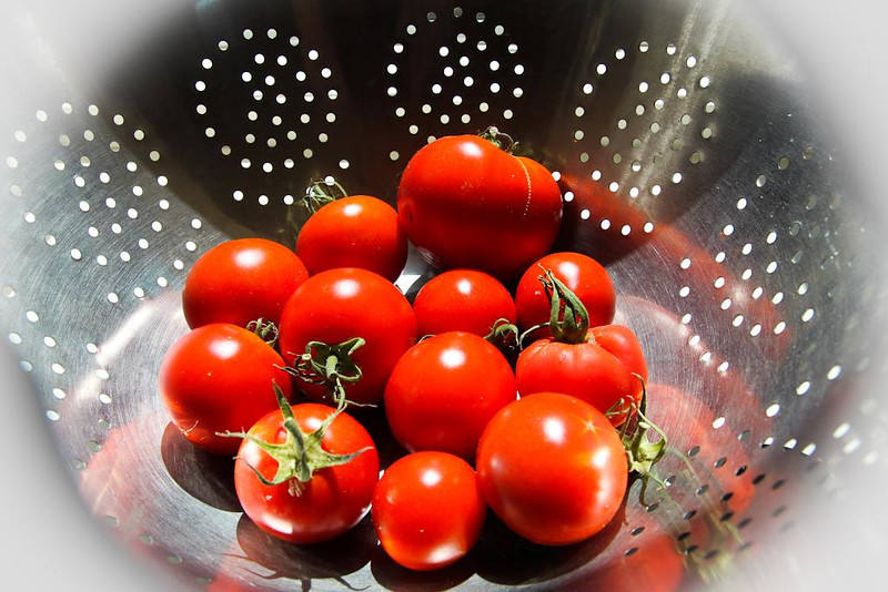 Last Pick Mike Horder N<br /> Who does not like a beautiful ripe tomato just picked from the garden.  Enticing table work that shows us the tomatoes very well.  Good arrangement and use of the holes in the colander to give some texture.  Highlights on each tomato are bright and can be distracting.  A  diffuser (lust a large piece of tracing paper) would have softened the lighting ad accentuated the shape and tone of the tomatoes - just a suggestion for further practice.  From a compositional point of view we wonder around looking for a main subject and we land on he point of difference, which is the tomato with its stalk still on.  The stalk is not sharp.  A little attention to use of aperture to get a slightly deeper depth of filed would have helped with this.  Accepted
