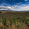 The Lucern field Allen Hogan A<br /> Gold layering with foreground middle and background.  Lovely sky and distant fields.  I find my eye working its way around this image and not finding a resting place or point of difference.  With all the space in the image I feel a focal point to draw us into the story would help this image.   Not Accepted