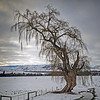 The Old Willow Jacquie Scott<br /> The shape and textures work well against the snowy landscape and cloudy sky. Good use of lead-in lines and the tree is strongly placed in the frame.<br /> Accepted  A grade
