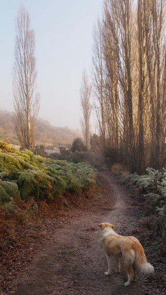 Homeward Bound  -  Jacquie Scott<br /> A lovely peaceful image, it is not terribly sharp but I think this adds to the restful mood. The dog fits in well with the muted colours and is standing in just the right place. Well titled, as he looks longingly at that lovely curved path that heads home. I can't find a lot wrong with this but it doesn't have that wow factor to give it an honours but certainly a well composed image with plenty of feeling to it. A Grade Merit