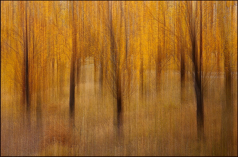 Autumn Drean  -  Barbara Lee<br /> Autumn Dream' a great title, it is certainly dream like. You can imagine wandering through these mystical trees. It is certainly somewhere I would like to be. You have a nice pathway which is slightly lighter than the rest which provides an opening to lead in to the back of the image and discover whatever mysteries lurk there. Lovely tonal range of gold and browns depicting autumn colours. A Grade Honours