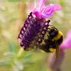 All a buzz about spring  -  Bevin YoungAn original take on Spring. Love the blurry atmosphere you have created. You have composed your image nicely with the flower on the diagonal and completely blurred the background which creates a feeling of movement.  Novice Honours