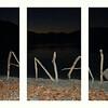 Driftwood Art Work  - Allan Ford