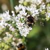 Busy Bees - Prue Wallis