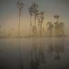 Morning Mist - Bob Steel