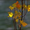Autumn Treasure - Barbara Lee