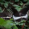 Mating butterflies – Allen Hogan