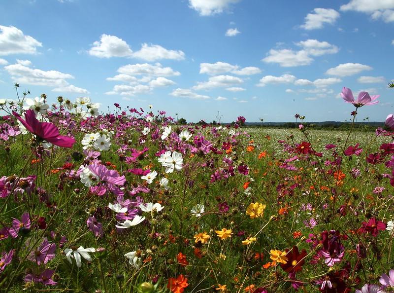 Summer wildflowers – Mike Horder