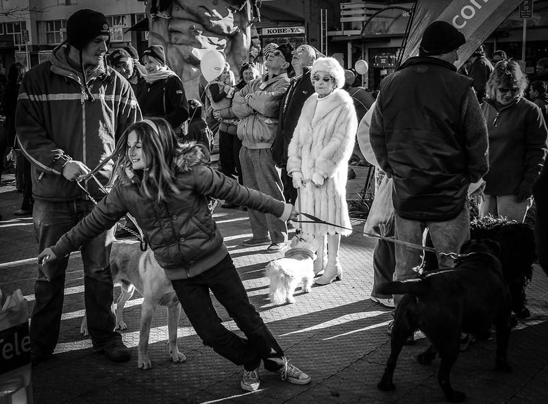 Queenstown dog show – Brent Hollow