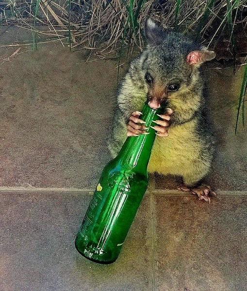 Pat the possum quenching his thirst – Esme Pohatu