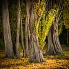 Last Autumn – Robert Norman