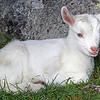New born kid – Leone Ward
