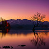 10 Wanaka tree pretty in pink – Bren Dyer