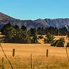 Golden fields – Bob Steel