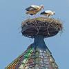 OPN 113 Colmar Church Storks By John Wattie