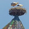 OPN 113 Colmar Church Storks By John Wattie