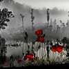 Lest We Forget by Barbara Lee