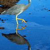 Wading Around by Allan Ford