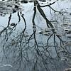 137_that_wanaka_tree