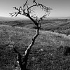 Lone Tree - Allan Ford