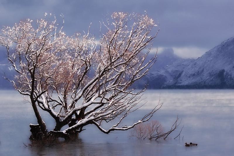 Not the Wanaka Tree - Marg Balogh