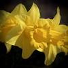 Spring has sprung – Marg Balogh