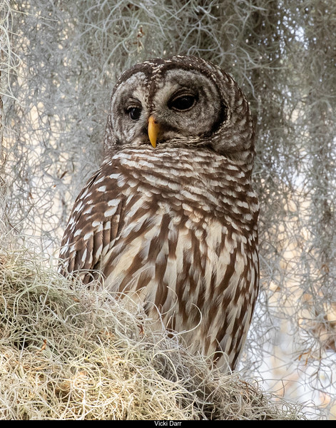 Whooo's There