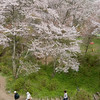 Hikers in Yoshino, Japan's most famous location for natural cherry blossoms.