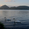 Swans at Toya Lake, taken from the door of my tent.