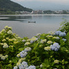 Mt. Fuji taken from Lake Kawaguchi, hydrangeas in the foreground.