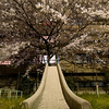 Both a nice centerpiece for the explosion of cherry blossoms in the background, and the roof over the head of a homeless man for a couple of years until fences were put up on the sides of the slide.